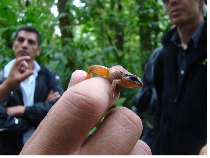 Declinación de anfibios
