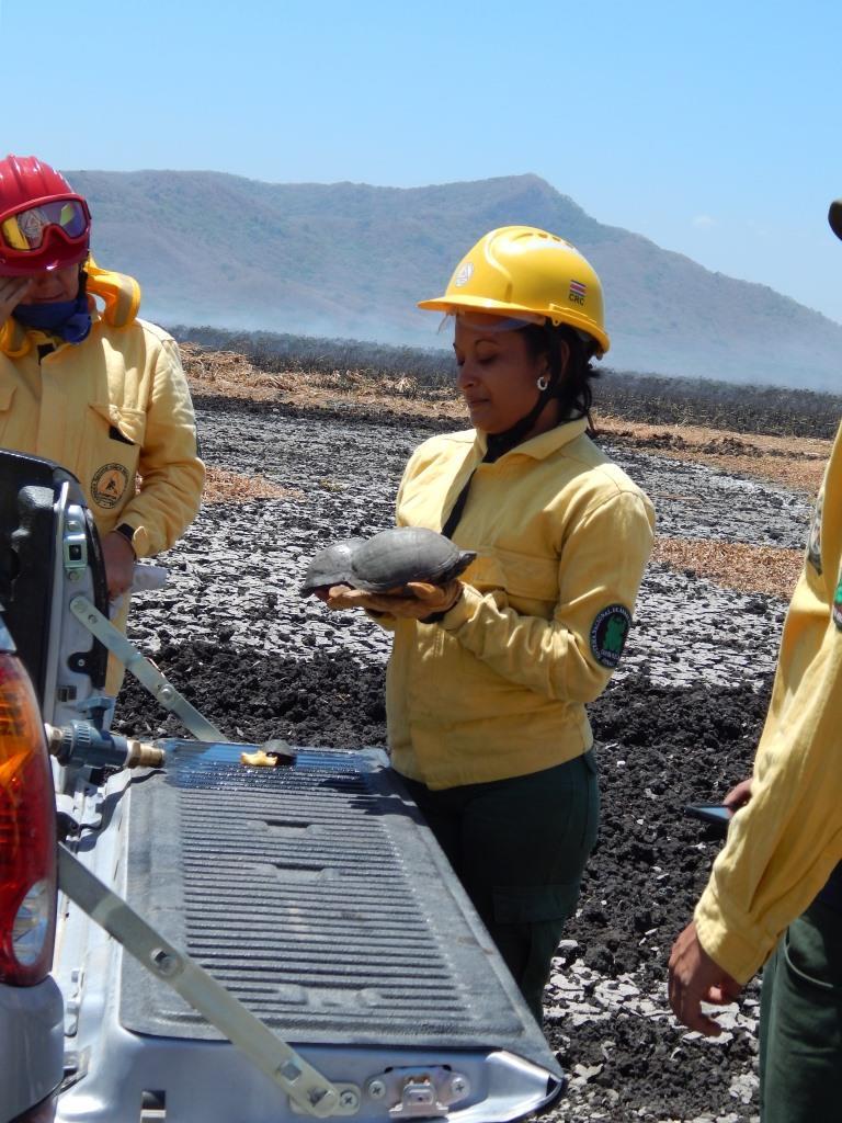 Tortugas rescatadas durante un incendio.