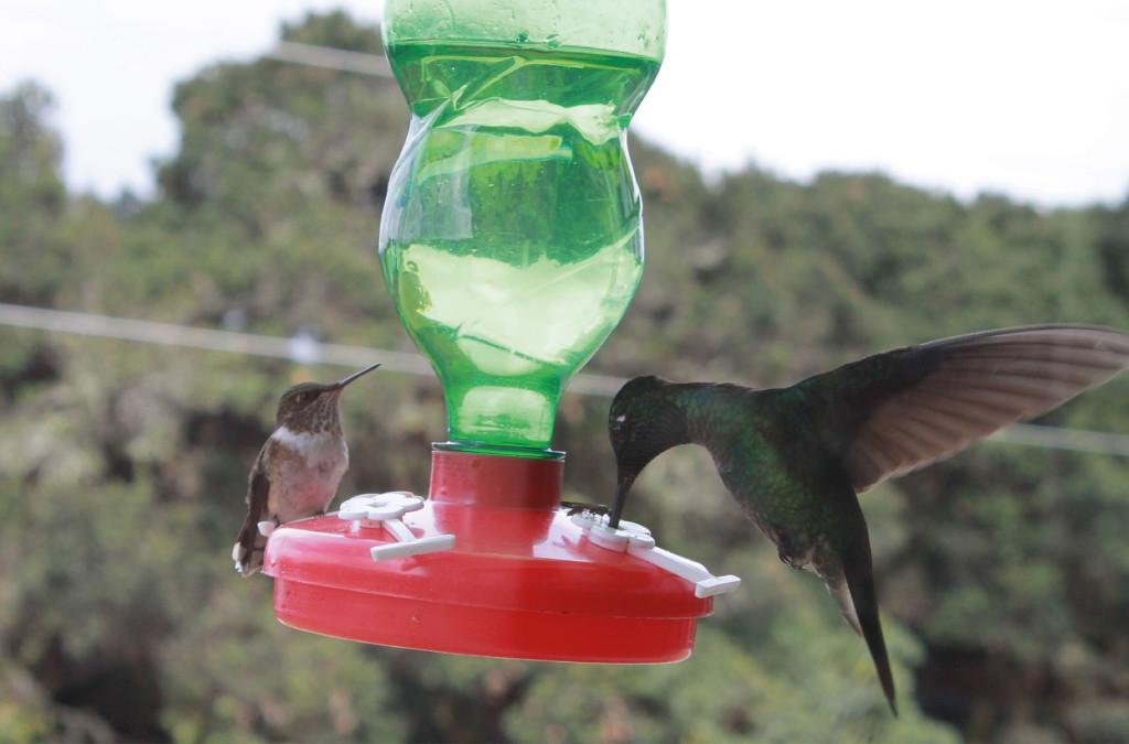 Porque no usar comedores artificiales para los colibríes
